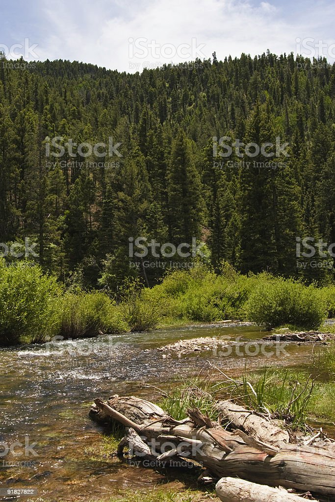 New Mexico Trout Stream stock photo