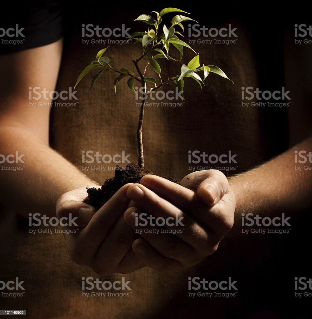 new plant in hand royalty-free stock photo