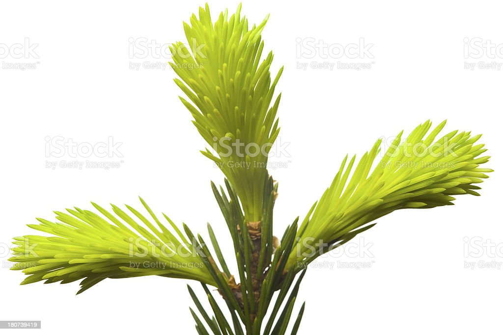 New plant life stock photo