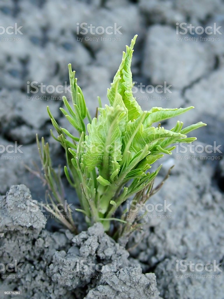 New Plant royalty-free stock photo