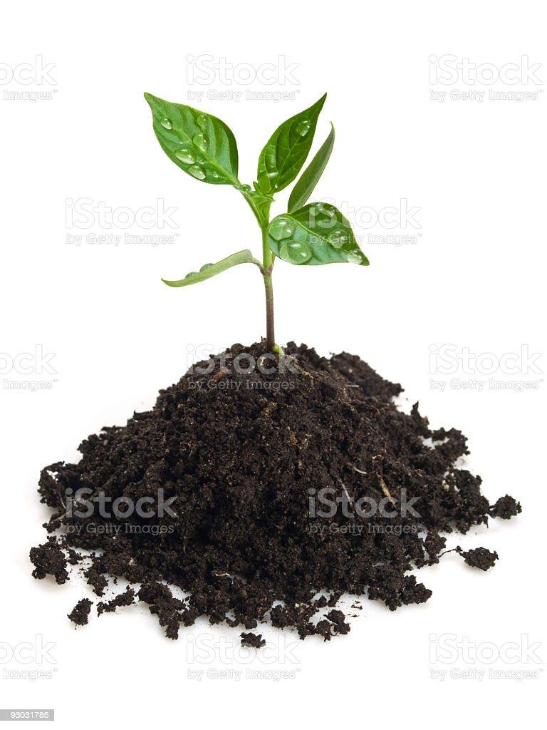 new plant royalty-free stock photo