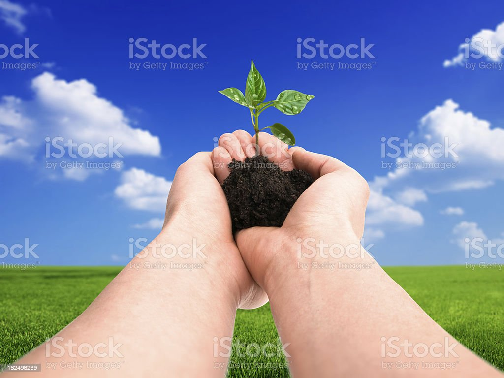 new plant w clipping path royalty-free stock photo