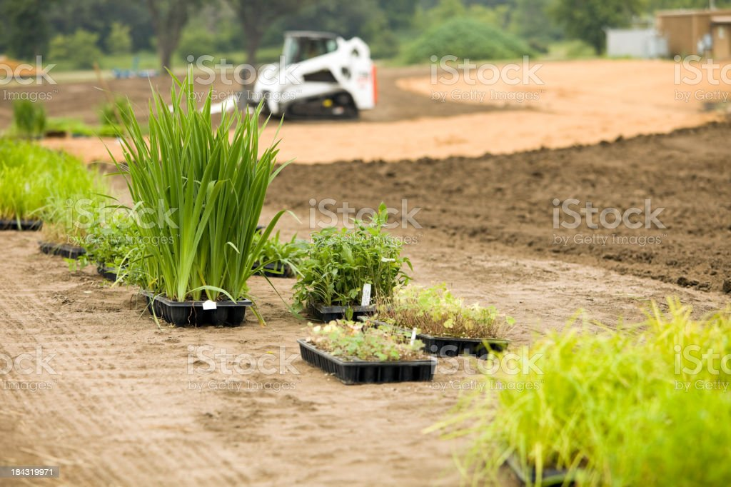 New Plants for Commercial Building Wetland Landscape stock photo