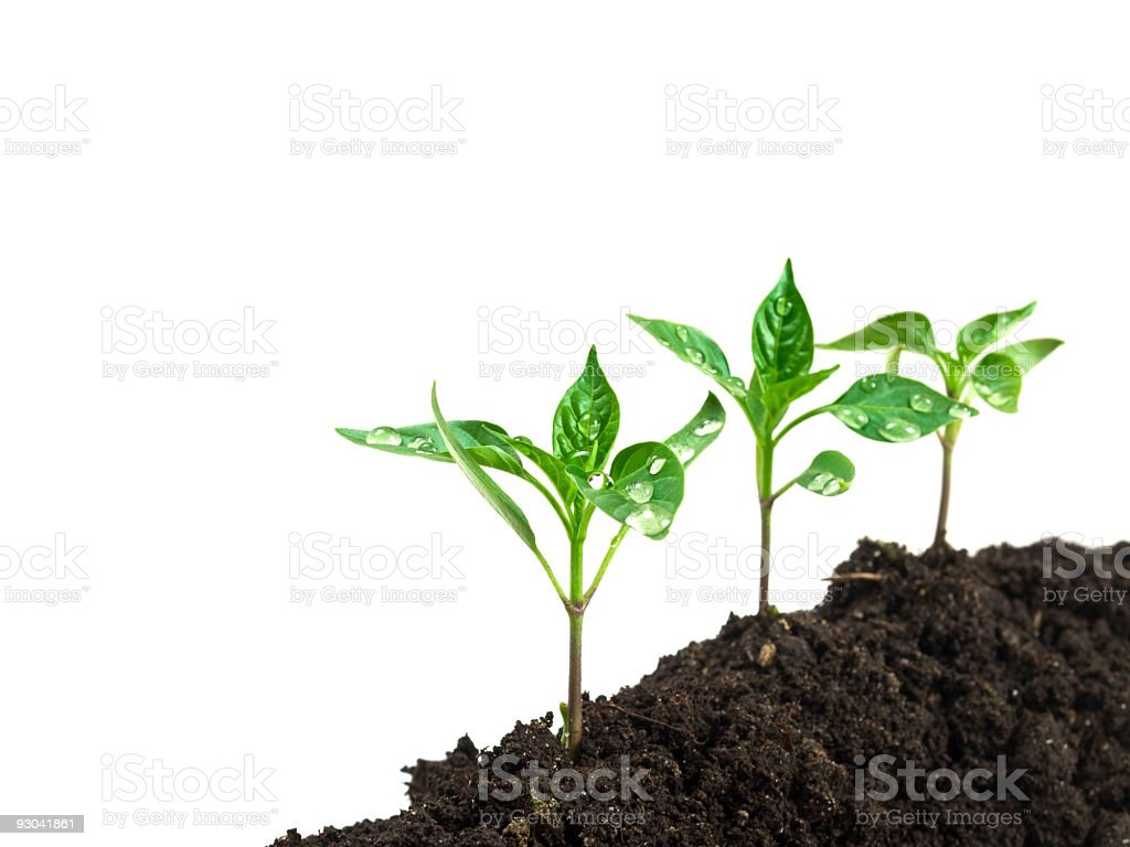 new plants royalty-free stock photo