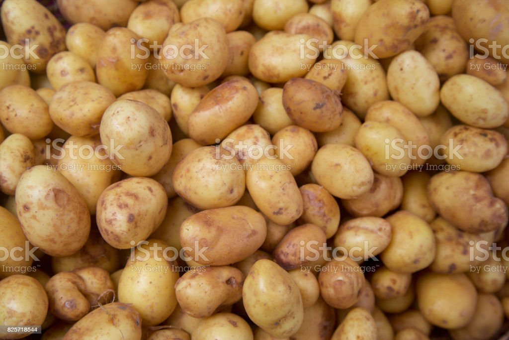 new potatoes at the farmer's market stock photo