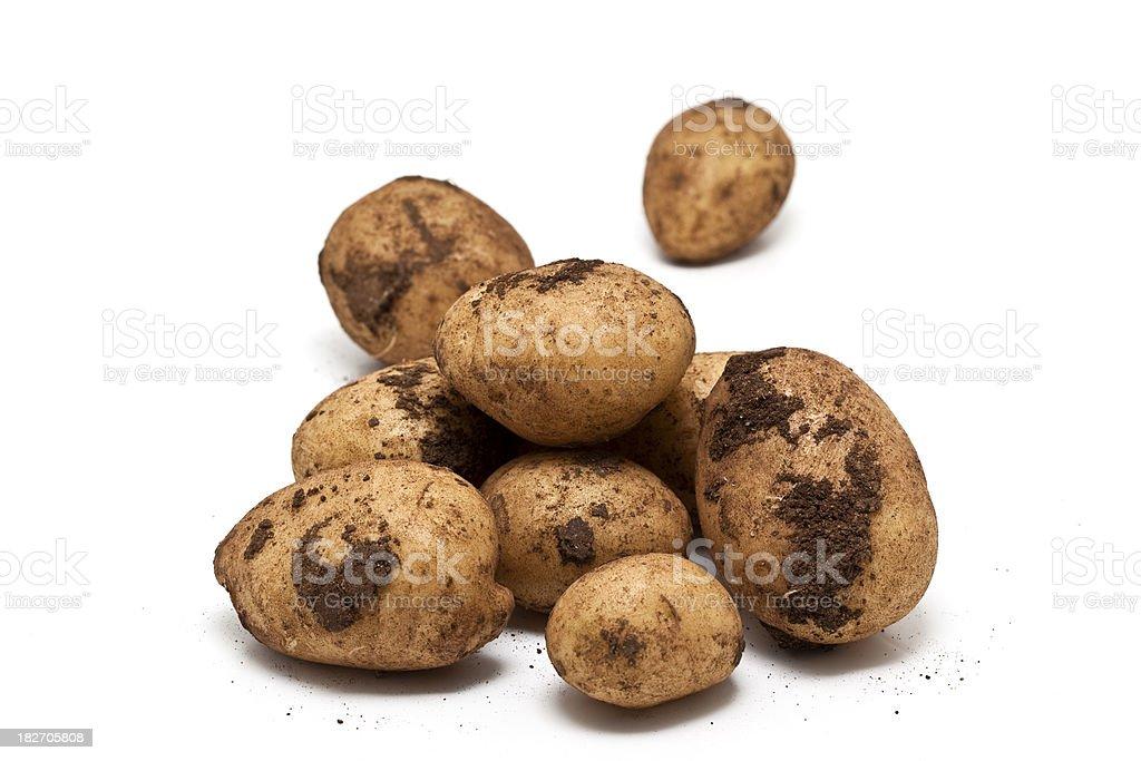 new potatoes stock photo