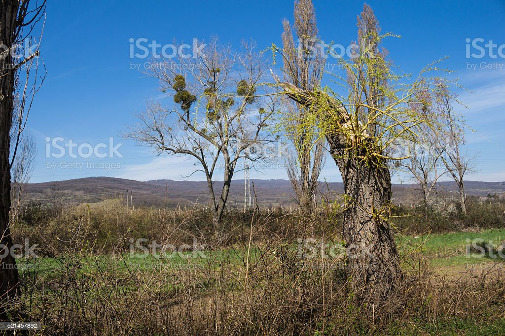 New power of the nature in the spring stock photo