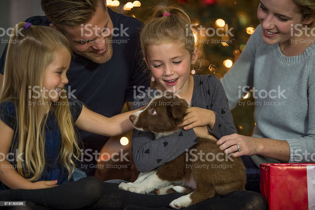 New Puppy for Christmas stock photo