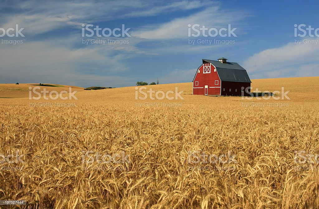 New Red Barn on the Palouse stock photo