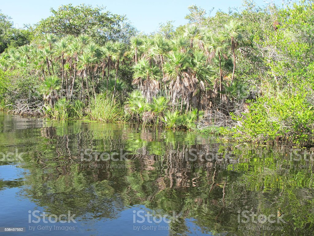 New River, Belize stock photo