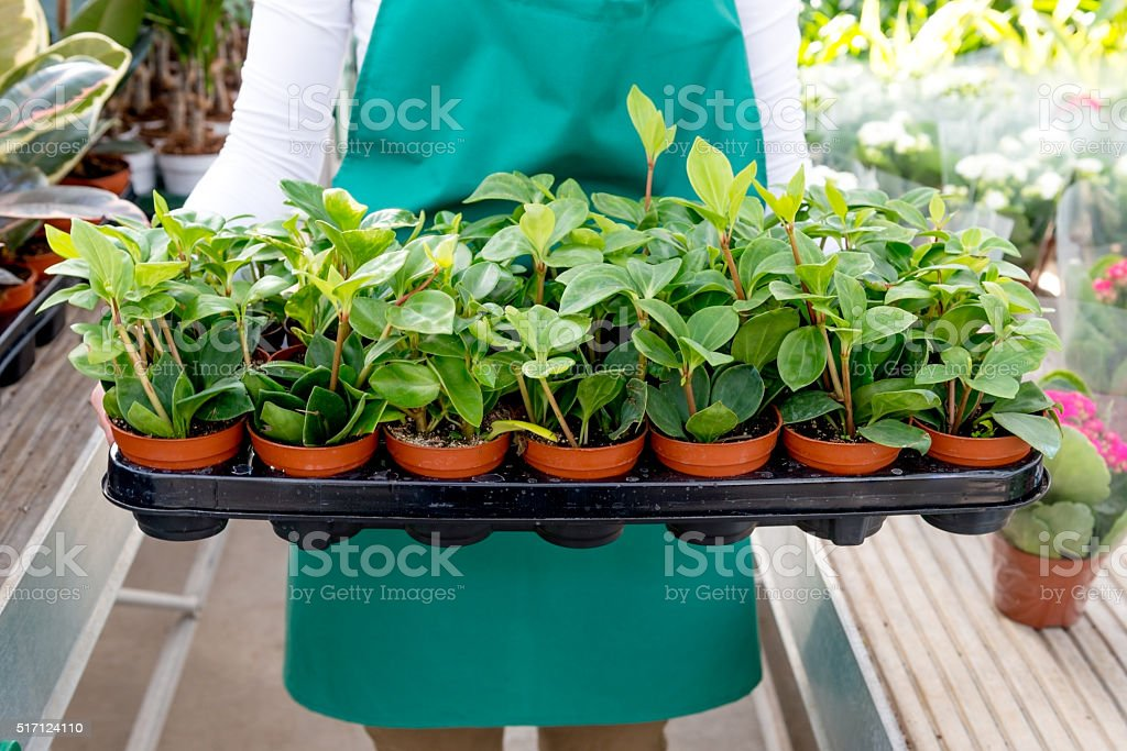 New seedlings in crate stock photo
