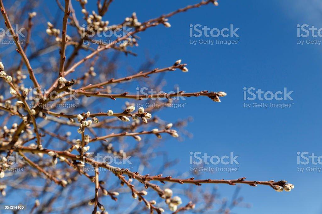 New shoots tree stock photo
