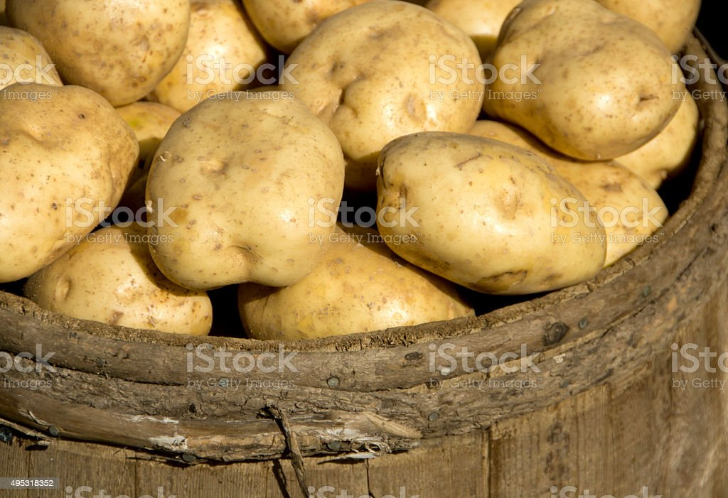 New Spuds stock photo