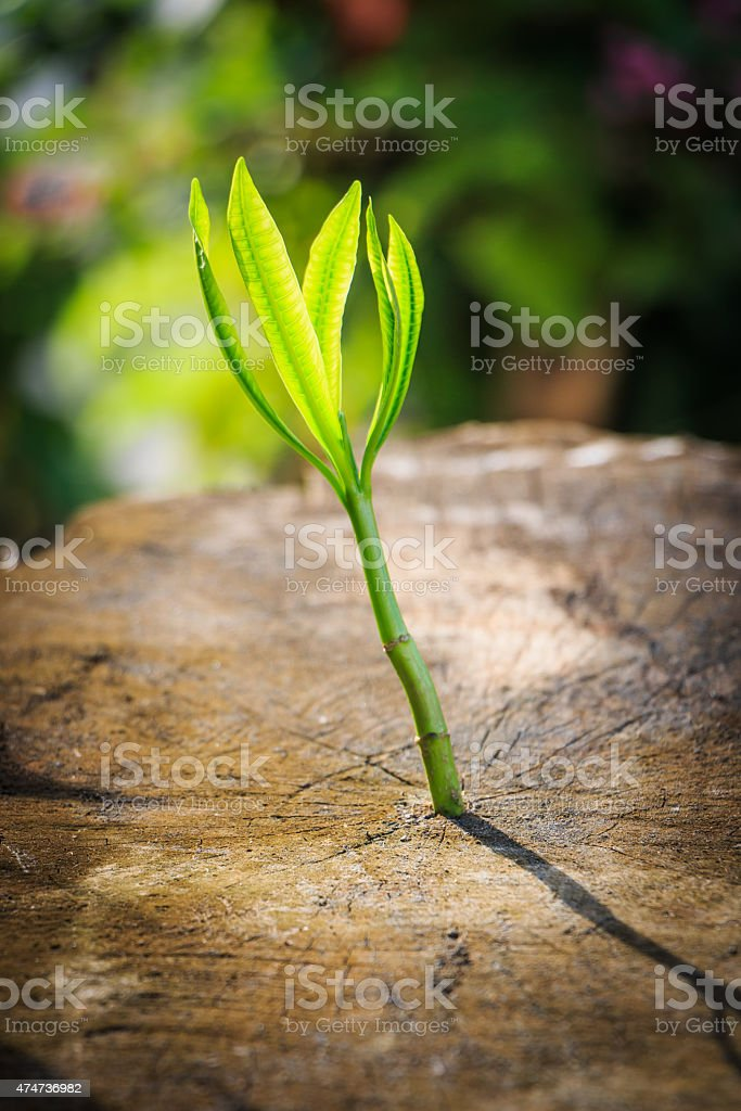 New tree growth up on dead tree as business concept stock photo
