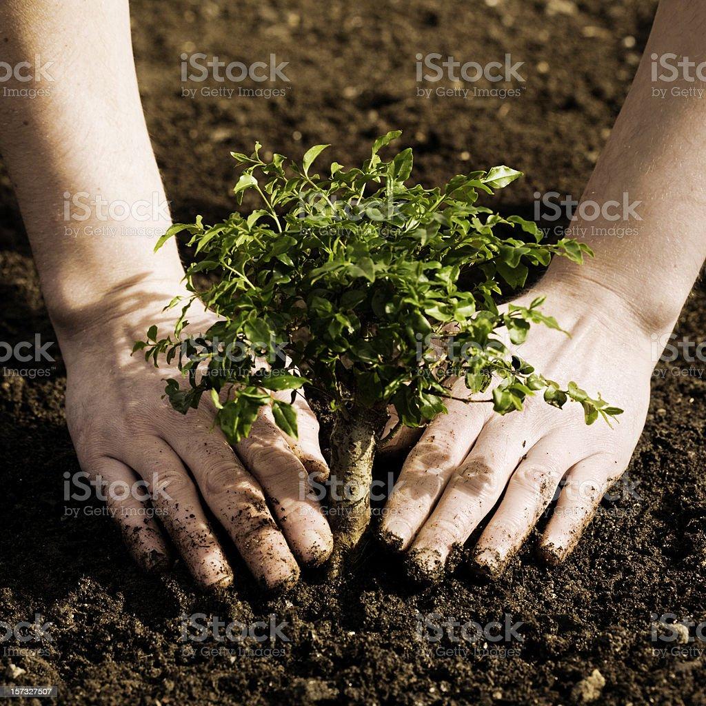 New tree royalty-free stock photo