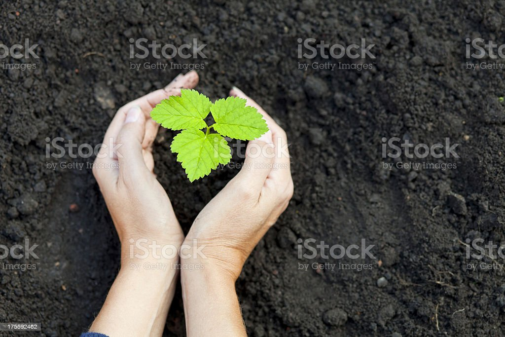 New tree royalty-free stock photo