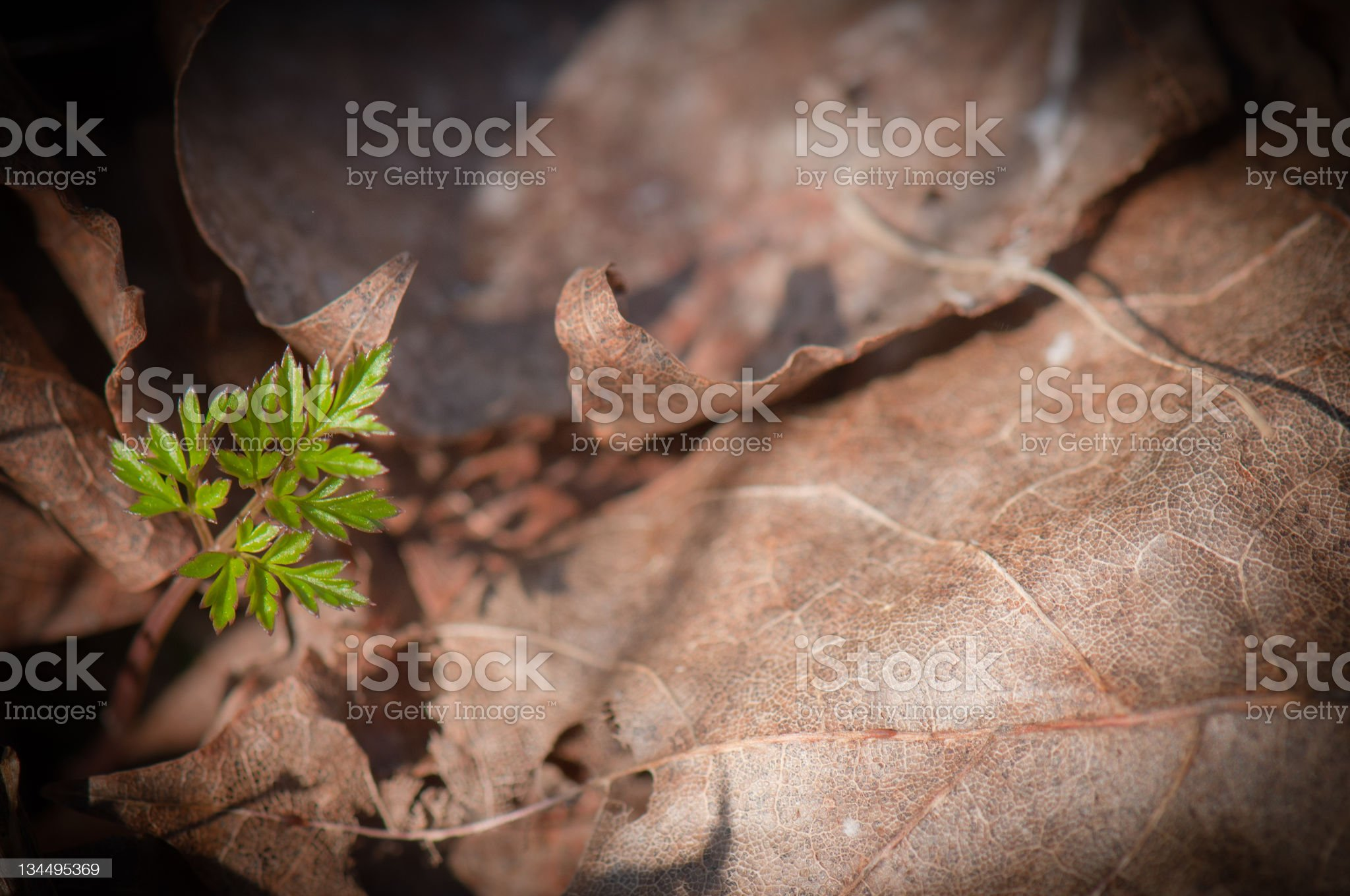 New versus old royalty-free stock photo
