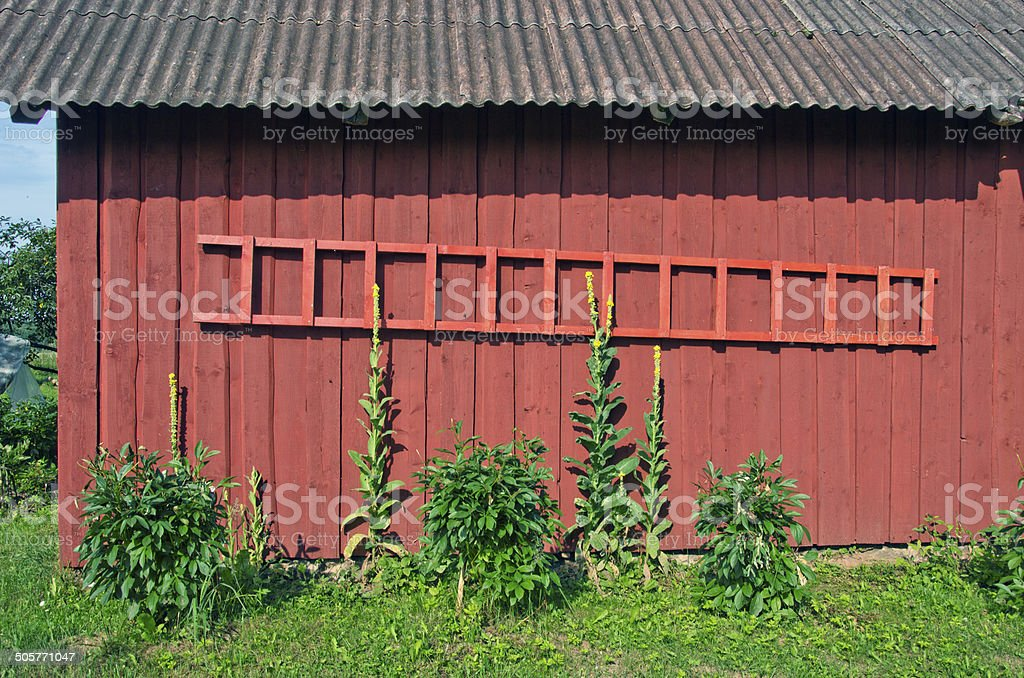 new wooden ladder on barn wall stock photo