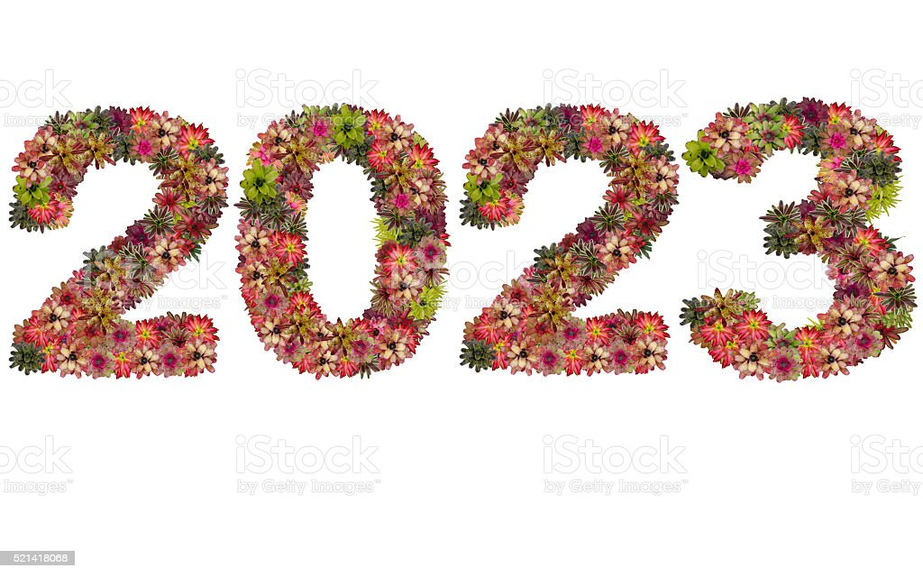 New year 2023 made from bromeliad flowers stock photo