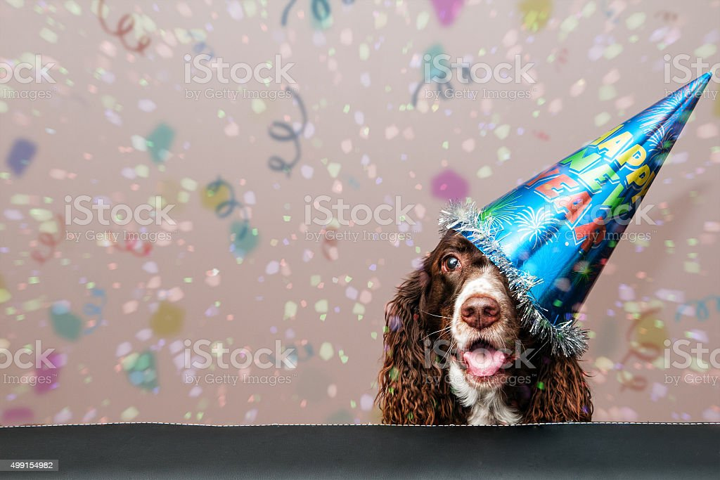 new year dog stock photo