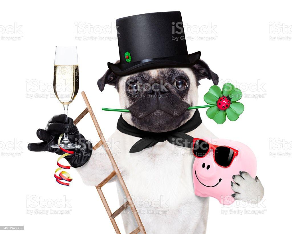 new years eve dog stock photo