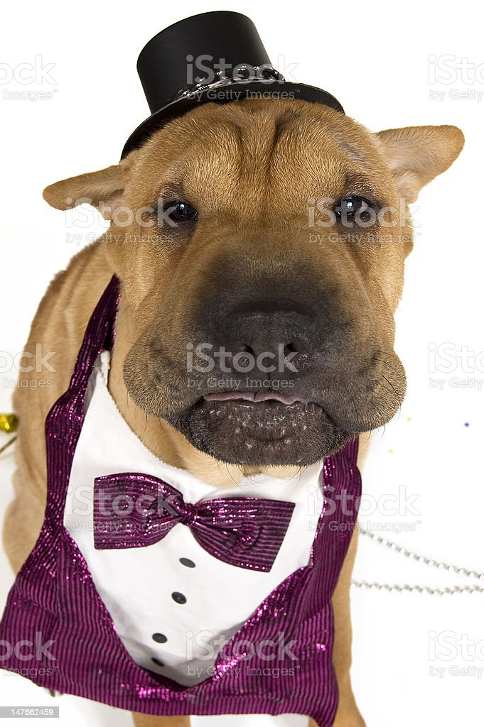 New Years Eve Party Puppy with Tounge Out royalty-free stock photo