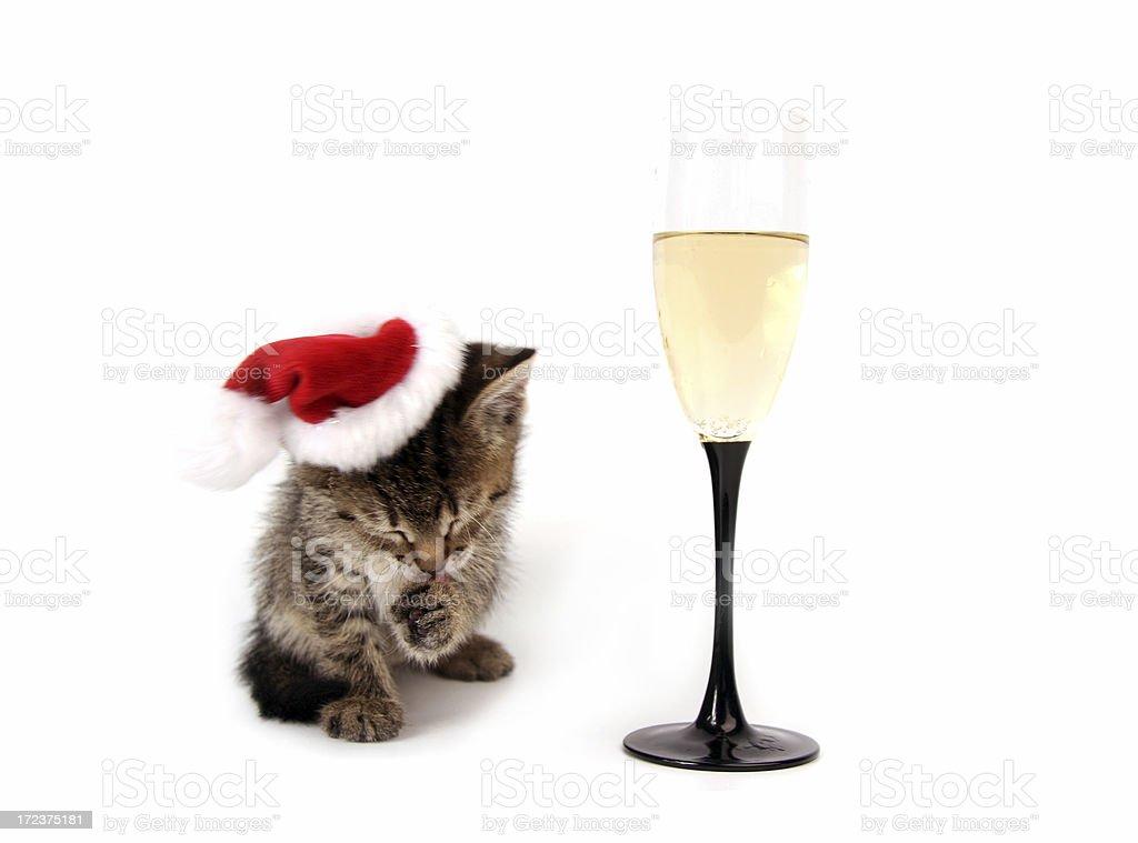 New Year's kitten royalty-free stock photo