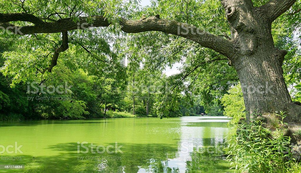 New York Algal Bloom Lake stock photo
