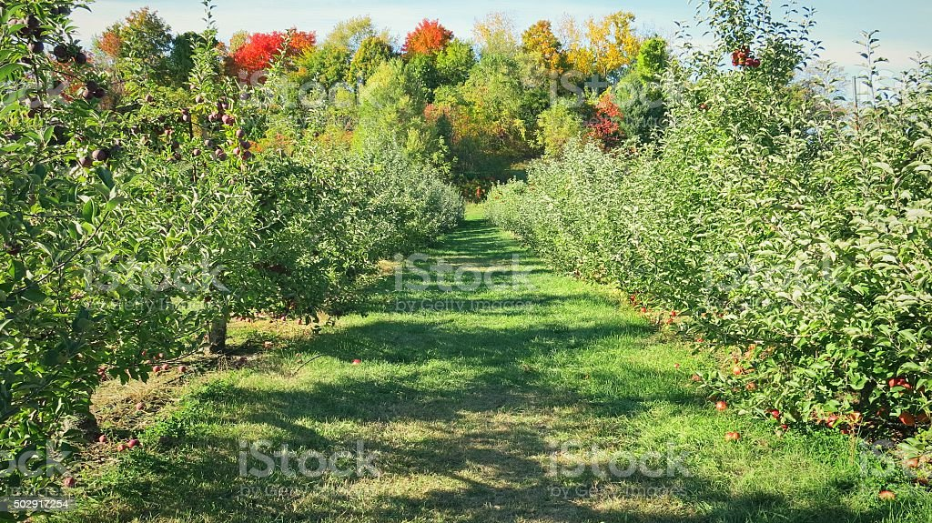 New York Apple Tree Orchard Path Landscape, Fall Foliage Forest stock photo