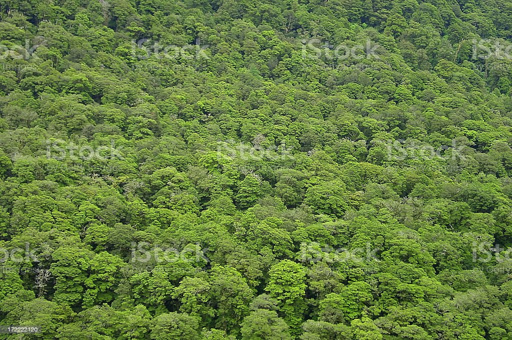 New Zealand beach forest. royalty-free stock photo