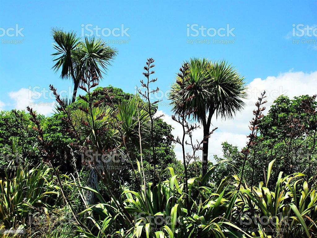 New Zealand bush in summer stock photo