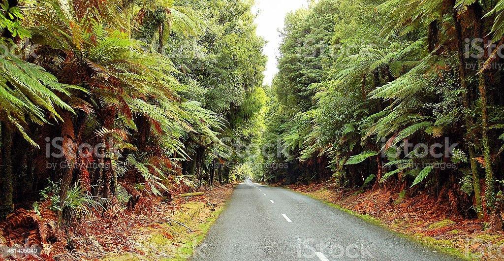 Nowa Zelandia bush zbiór zdjęć royalty-free