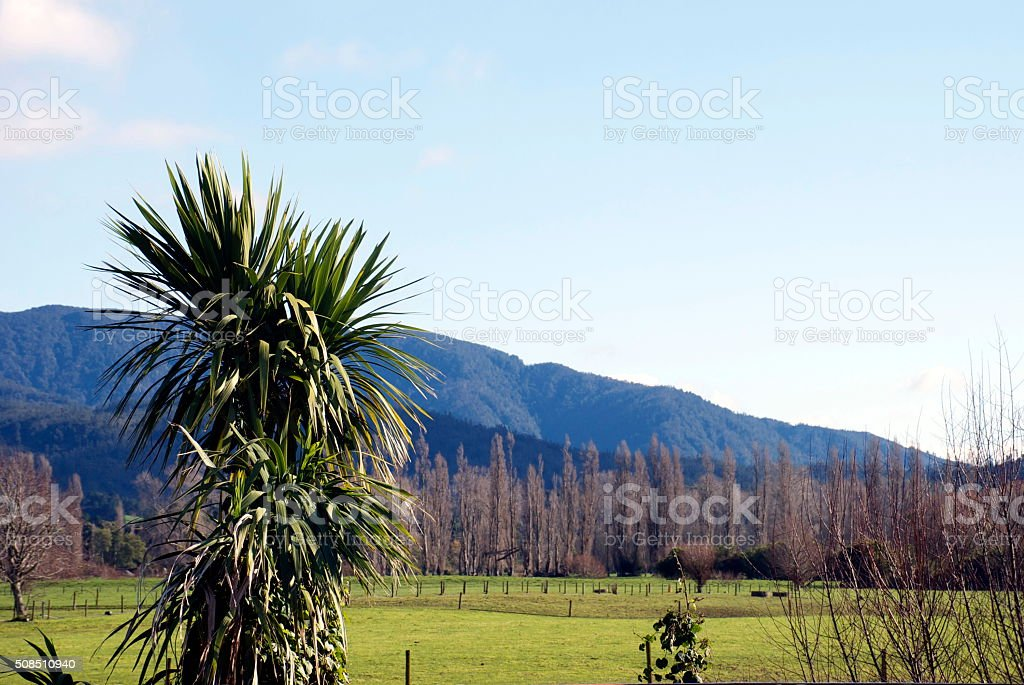 New Zealand Cabbage Tree Landscape stock photo