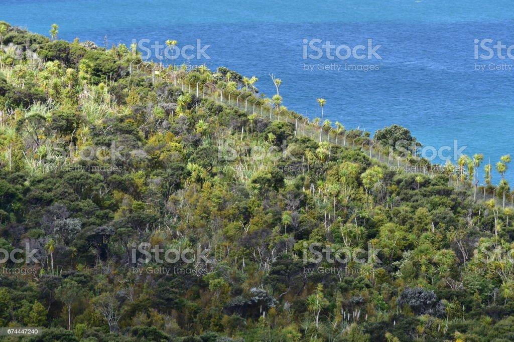 New Zealand coastal forest stock photo