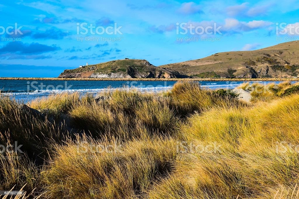 New Zealand costal beach with high herb on the dune royalty-free stock photo