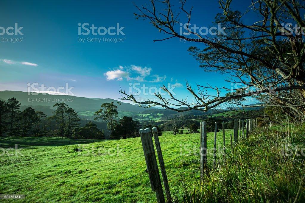 New Zealand Farmland stock photo