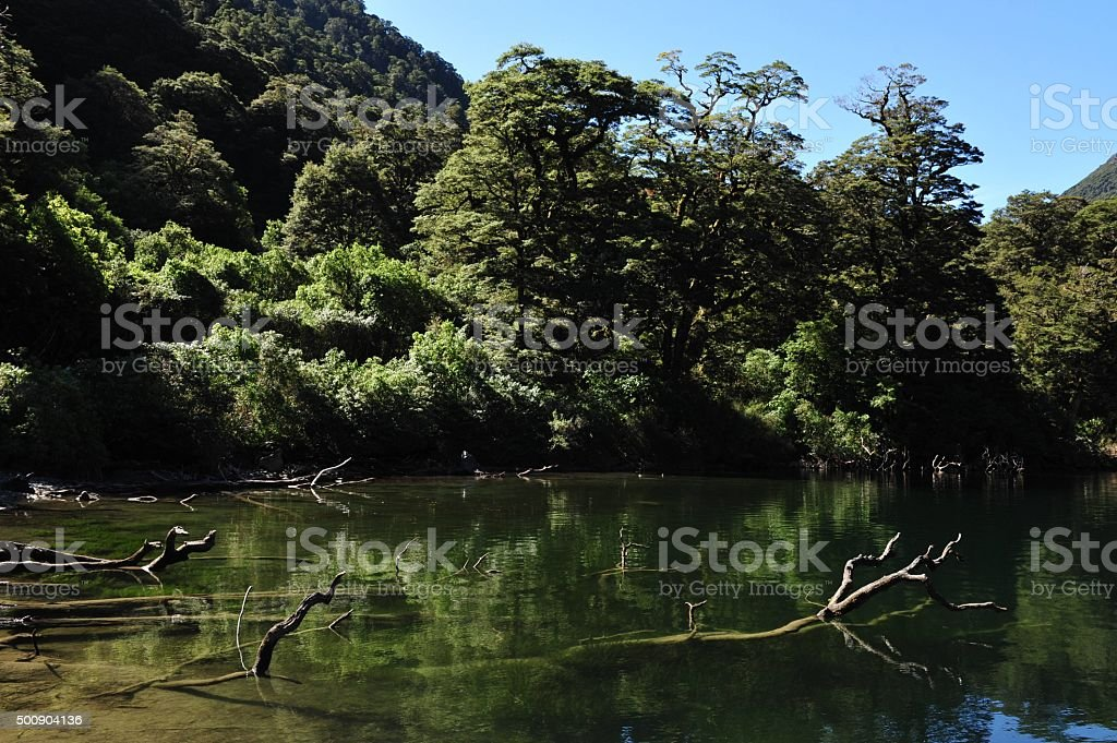 New Zealand Fiordland stock photo