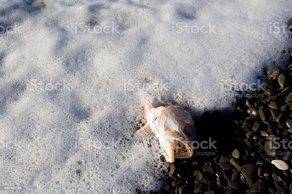 New Zealand, fish carcass at beach stock photo