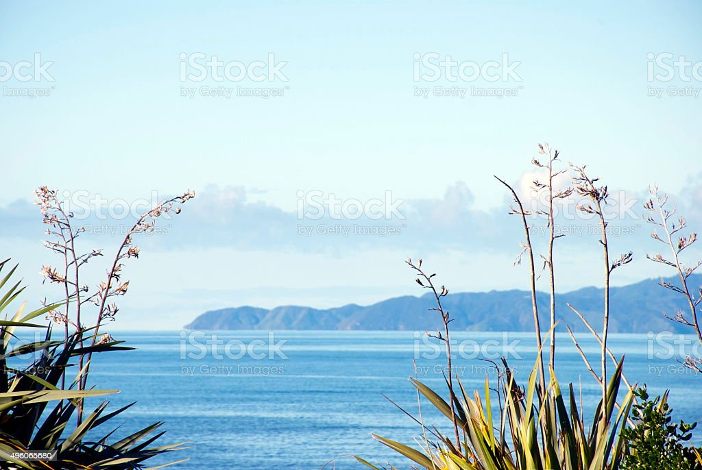 New Zealand Flax and Seascape stock photo