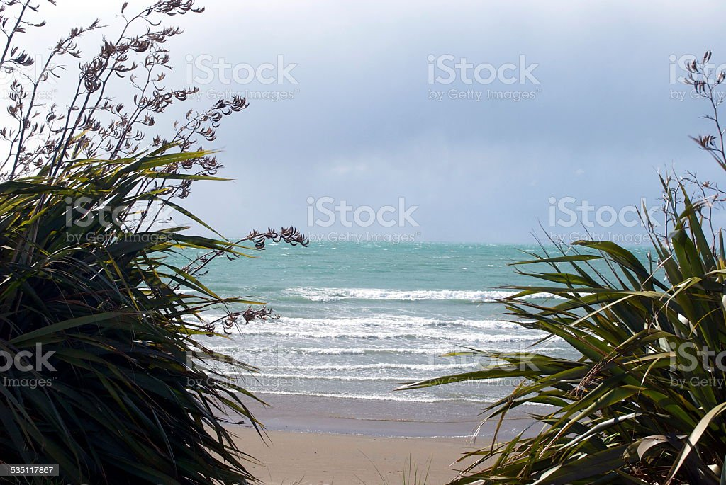 New Zealand Flax (Harakeke) & Beach stock photo