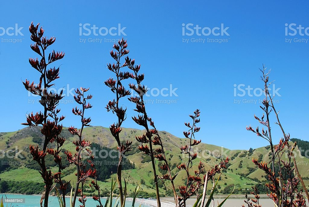 New Zealand Flax Flower with distant Land and Sea stock photo