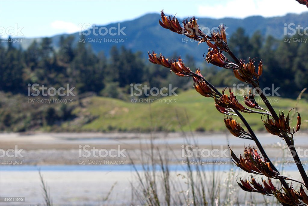 New Zealand Flax Flower with distant Ruralscape stock photo