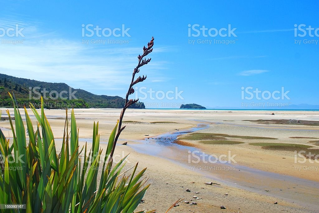 New Zealand Flax Flower with distant Seascape stock photo