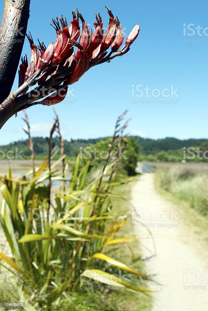 New Zealand Flax Flower with Pathscape royalty-free stock photo