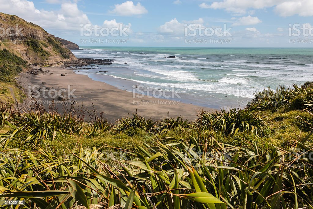 New Zealand flax growing at Muriwai beach stock photo