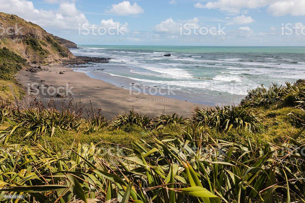 New Zealand flax growing at Muriwai beach stock photo