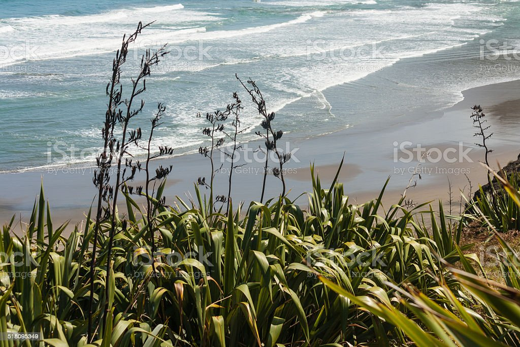 New Zealand flax stock photo