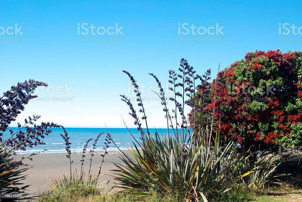 New Zealand Flax & Pohutukawa Seascape stock photo