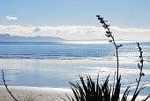 New Zealand Flax (Harakeke) Seascape