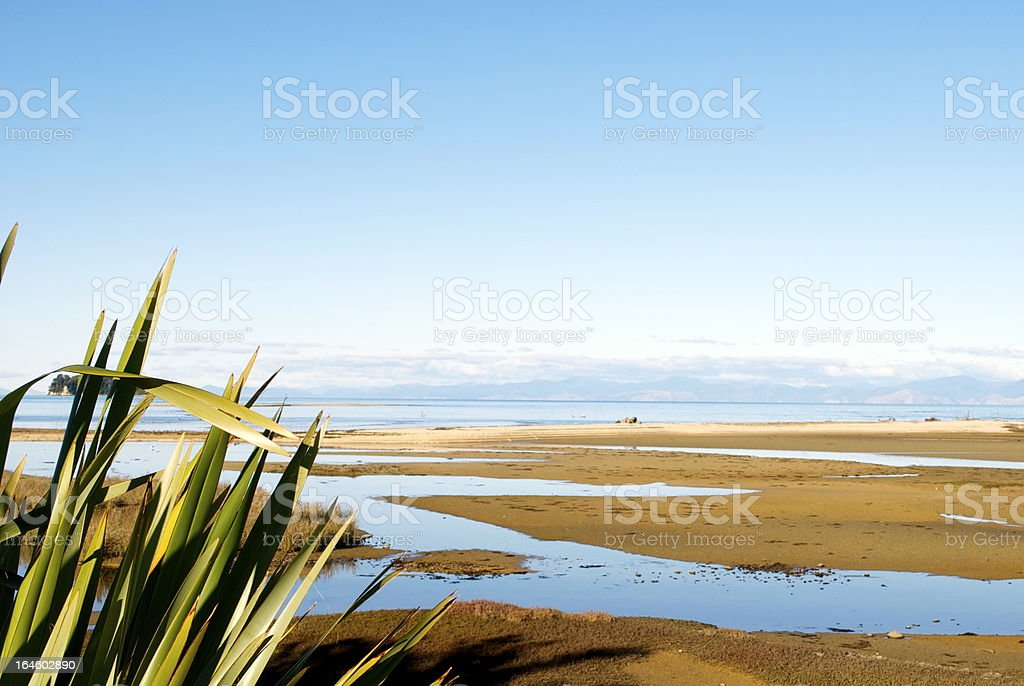 New Zealand Flax with distant Seascape stock photo